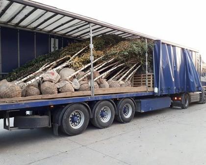 bomen transport